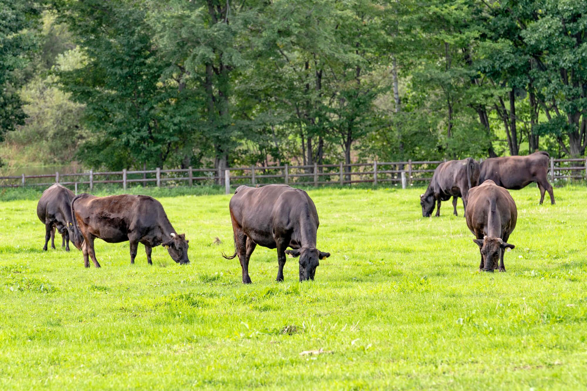 A4・A5の黒毛和牛のイメージ写真